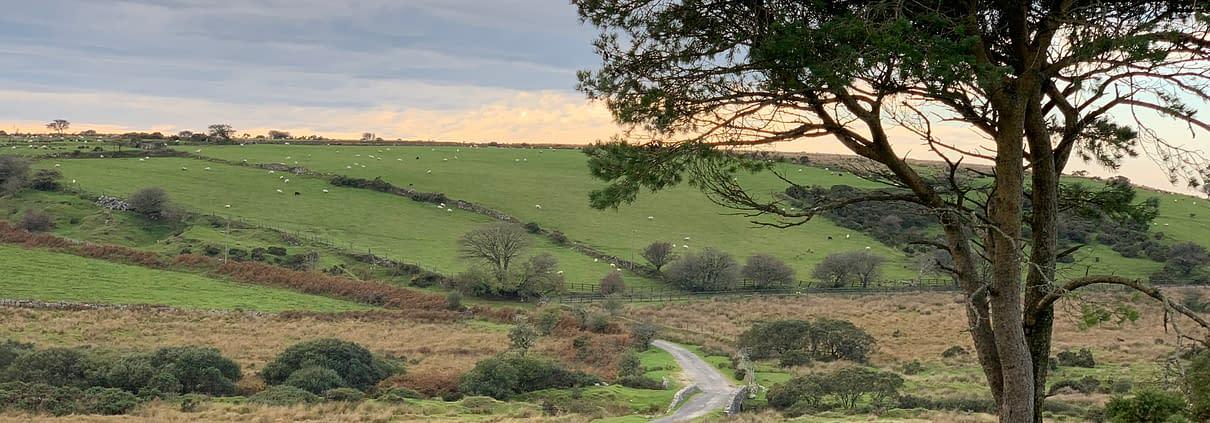 Bodmin Moor Thrussells
